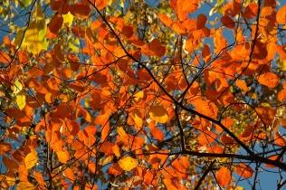leaves-228104_1920